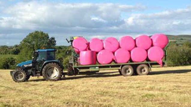Pink silage, making me smile